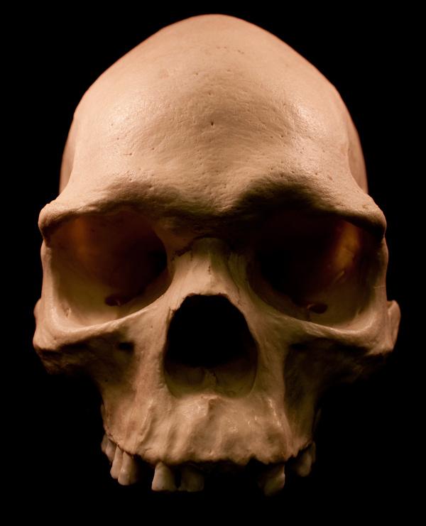 skulls-600-5