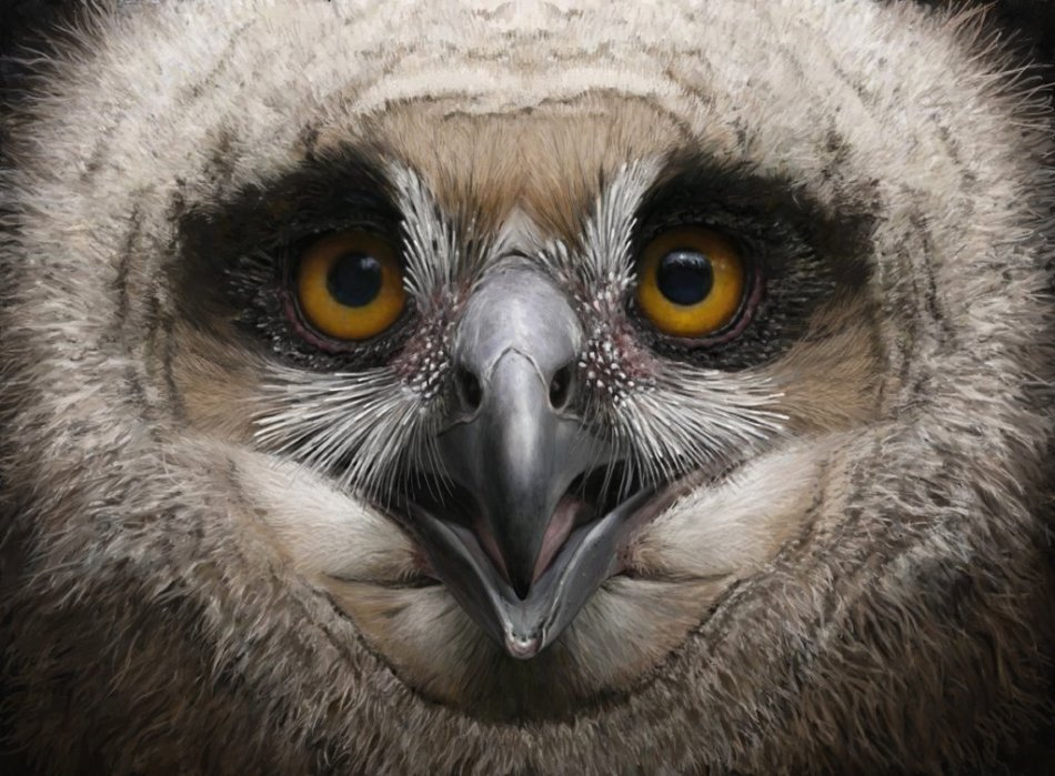 eagle_owl_chick_by_renum63-d7gckpv